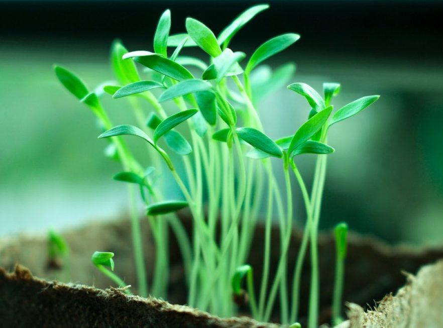Wachstum/ Erträge